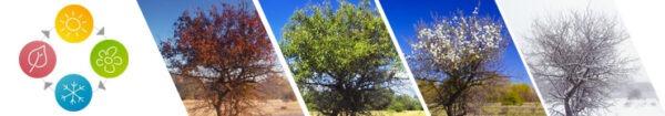 De vier seizoenen weergegeven door bomen