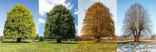 De vier seizoenen weergegeven door de natuur